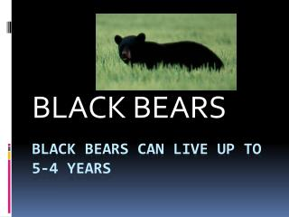 Black bears can live up to 5-4 years