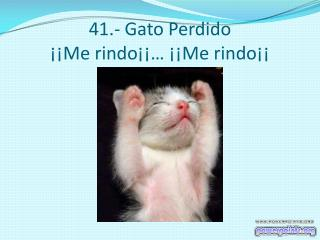 41.- Gato Perdido ¡¡Me rindo¡¡… ¡¡Me rindo¡¡