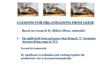 4 LESSONS FOR ORGANISATIONS FROM GEESE Based on research by Milton Olson, naturalist