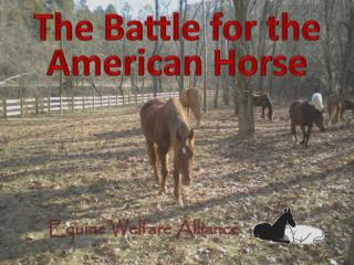 The Battle for the American Horse