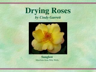Drying Roses by Cindy Garrett