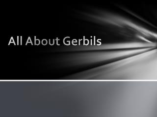 All About Gerbils