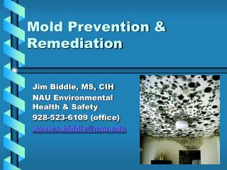 Mold Prevention & Remediation