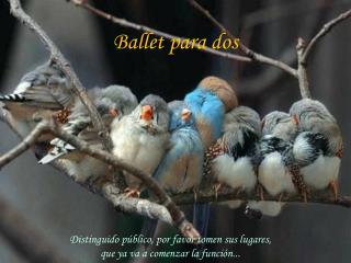 Ballet para dos