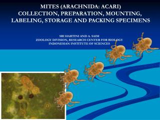 MITES (ARACHNIDA: ACARI) COLLECTION, PREPARATION, MOUNTING,