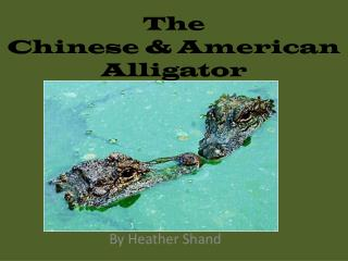 The  Chinese & American Alligator