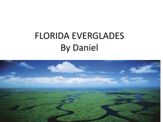 FLORIDA  EVERGLADES By Daniel
