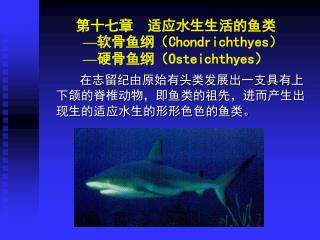 第十七章  适应水生生活的鱼类 — 软骨鱼纲( Chondrichthyes ) — 硬骨鱼纲( Osteichthyes )