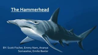 The Hammerhead: