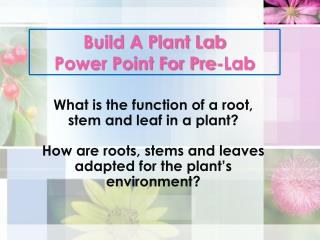 Build A Plant Lab  Power Point For Pre-Lab