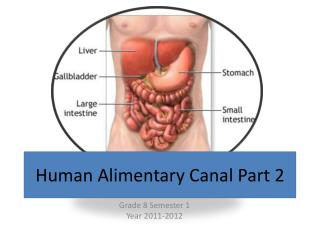 Human Alimentary Canal Part 2