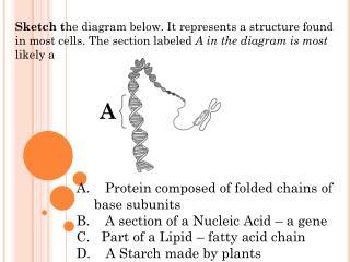 Sketch t he diagram below. It represents a structure found