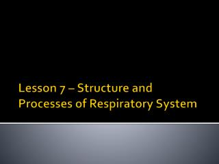 Lesson 7 – Structure and Processes of Respiratory System