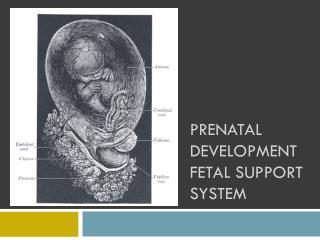 Prenatal Development Fetal Support System