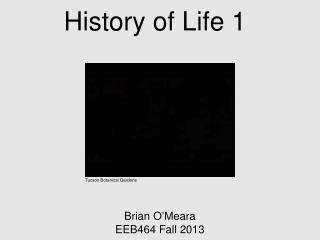 History of Life 1
