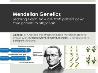 Mendelian  Genetics Learning Goal:   How are traits passed down from parents to offspring?