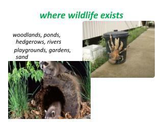 where wildlife exists