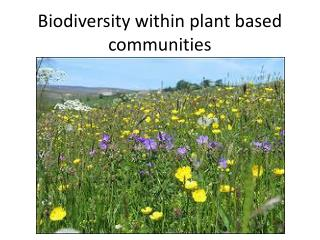Biodiversity within plant based communities