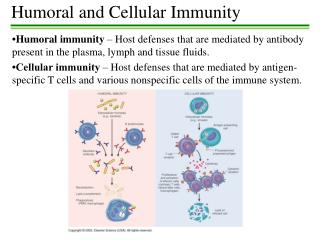 Humoral  and Cellular Immunity