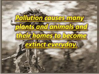 Pollution causes many plants and animals and their homes to become extinct everyday.