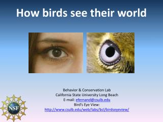 How birds see their world