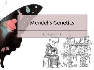 Mendel�s Genetics