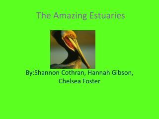 The Amazing  Estuaries