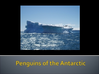 Penguins in the Antarctic Climate