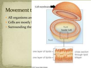 Movement through Cells