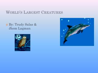 World's  Largest Creatures