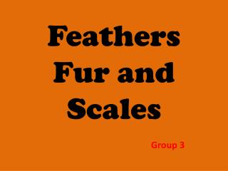Feathers Fur and Scales