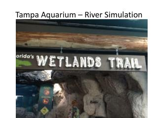 Tampa Aquarium – River Simulation