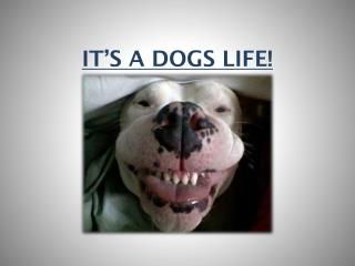 IT�S A DOGS LIFE!