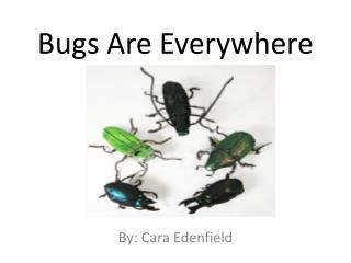 Bugs Are Everywhere