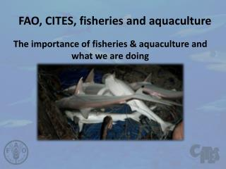 FAO, CITES, fisheries and aquaculture