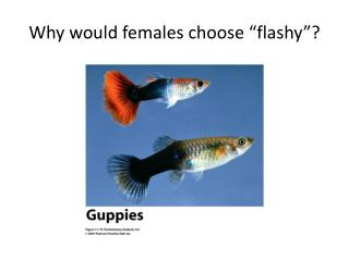 "Why would females choose ""flashy""?"