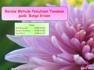 Review Metode Pemuliaan Tanaman pada  Bunga Krisan