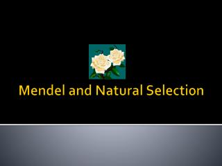 Mendel and Natural Selection