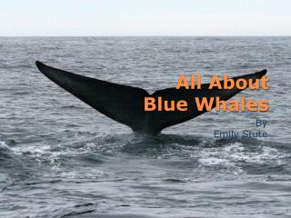 All About Blue Whales