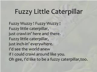 Fuzzy Little Caterpillar Fuzzy  Wuzzy  ! Fuzzy  Wuzzy  !  Fuzzy little caterpillar,