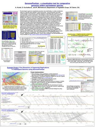 GenomePixelizer - a visualization tool for comparative  genomics within and between species. A. Kozik, E. Kochetkova,  a