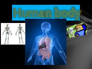 Huma n body