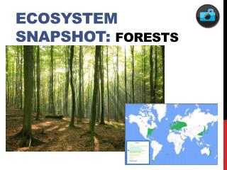 Ecosystem Snapshot: Forests