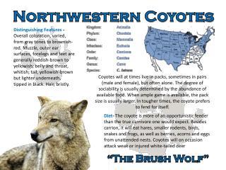 Northwestern Coyotes