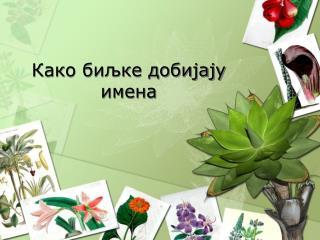Како биљке добијају имена