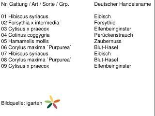 Nr. Gattung / Art / Sorte /  Grp .  Deutscher Handelsname 01  Hibiscus syriacus Eibisch