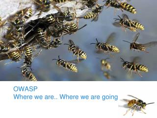 OWASP Foundation