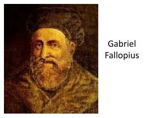 Gabriel  Fallopius