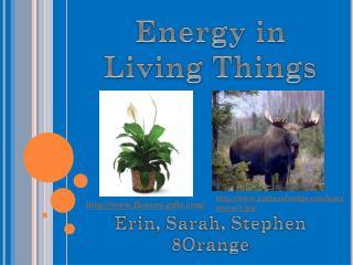Energy in Living Things Erin, Sarah, Stephen 8Orange