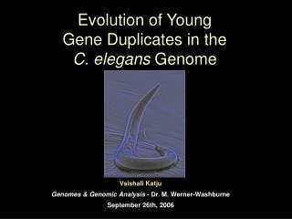 Evolution of Young  Gene Duplicates in the  C. elegans Genome